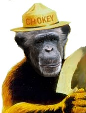 Chokey the Chimp